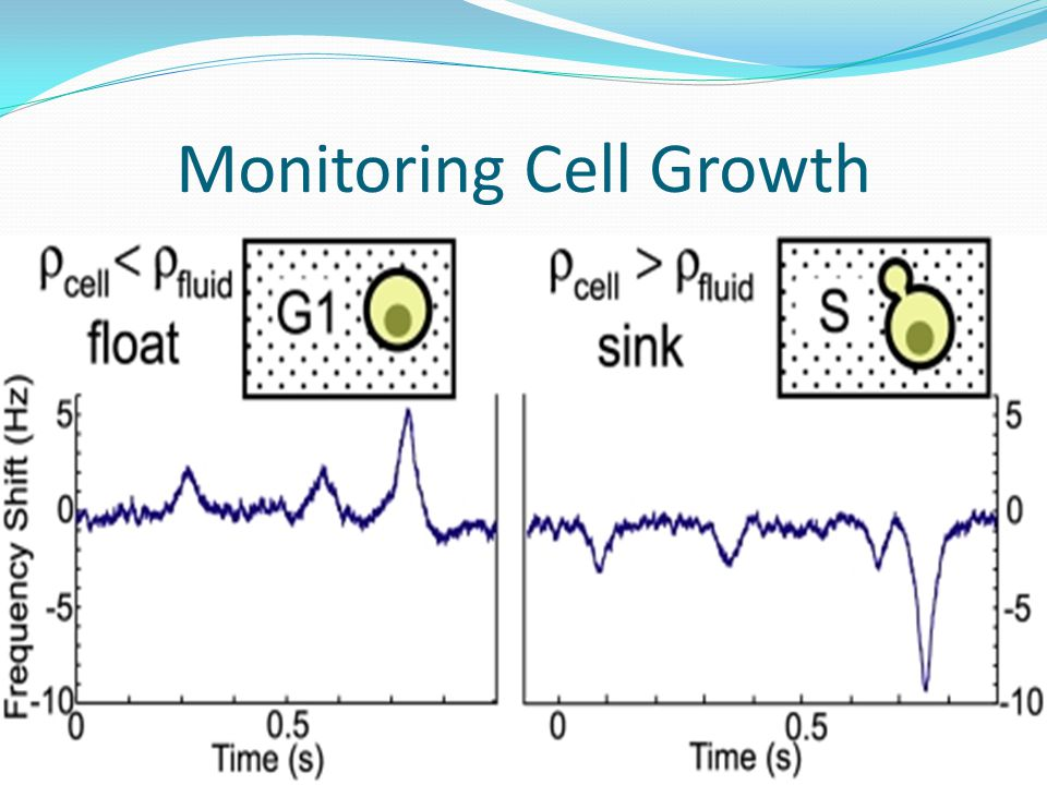 Monitoring Cell Growth