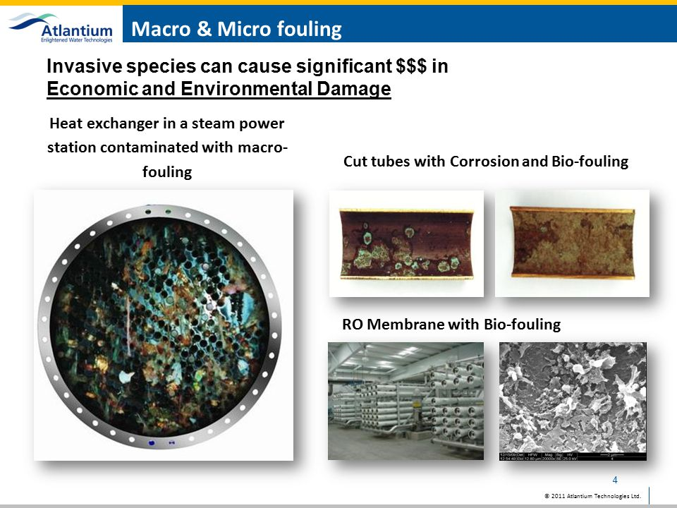 Cut tubes with Corrosion and Bio-fouling