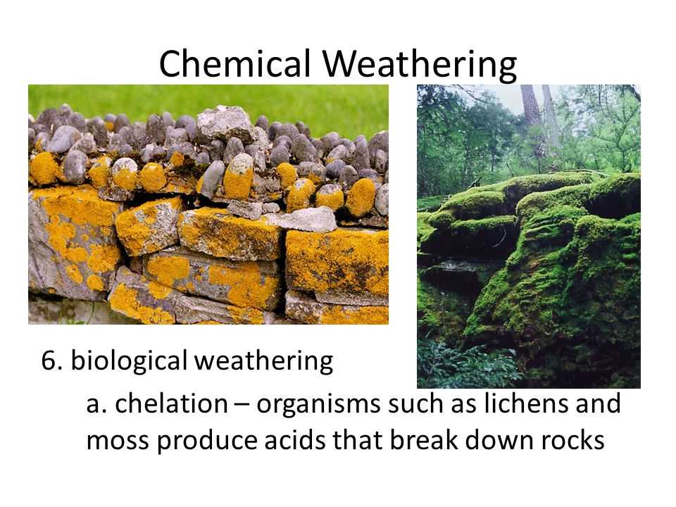 Chemical Weathering 6. biological weathering