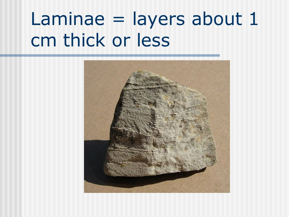 Laminae = layers about 1 cm thick or less