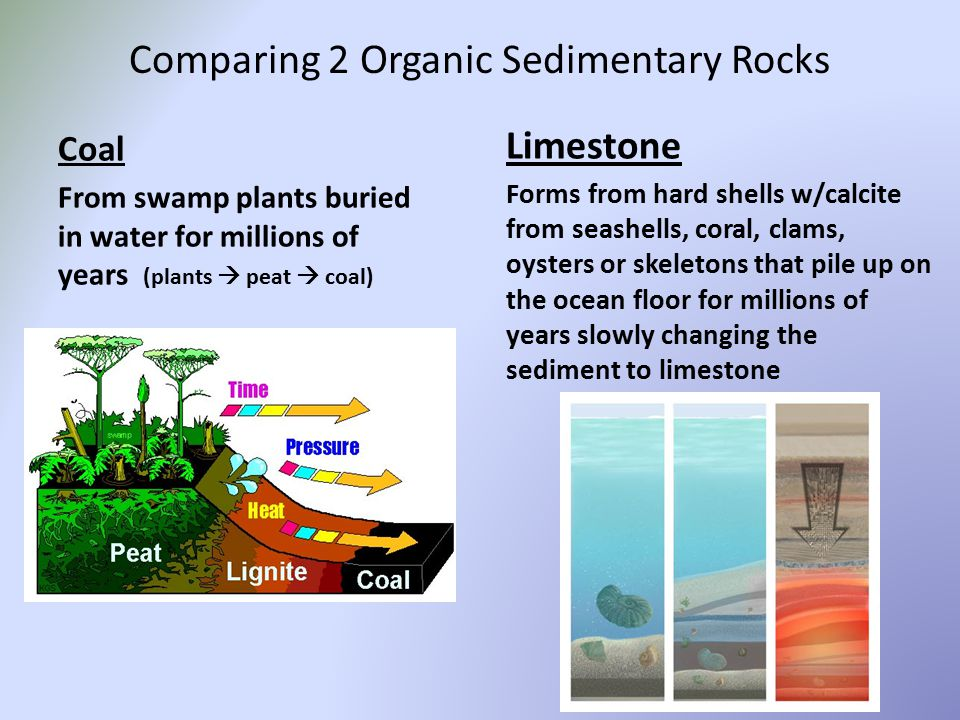 Comparing 2 Organic Sedimentary Rocks