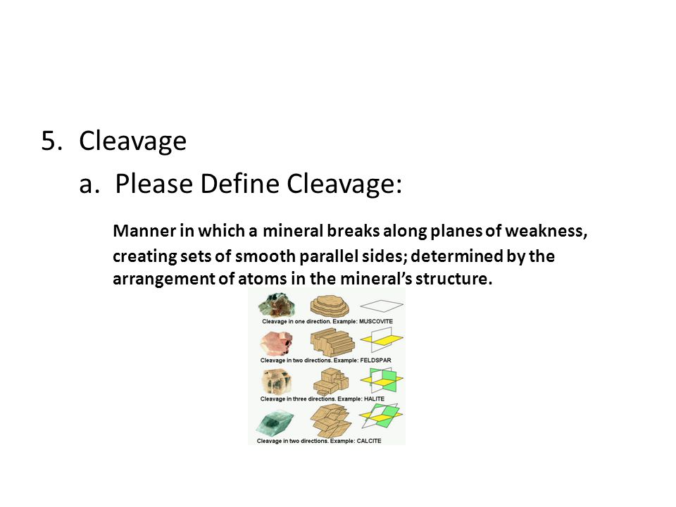 Cleavage a. Please Define Cleavage: