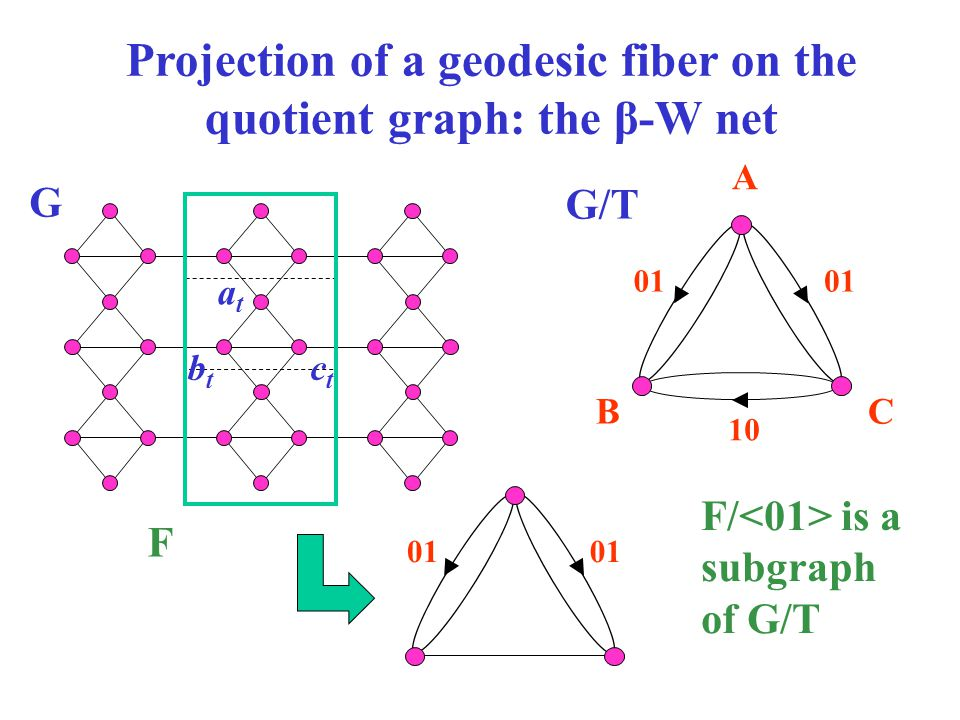 Projection of a geodesic fiber on the quotient graph: the β-W net