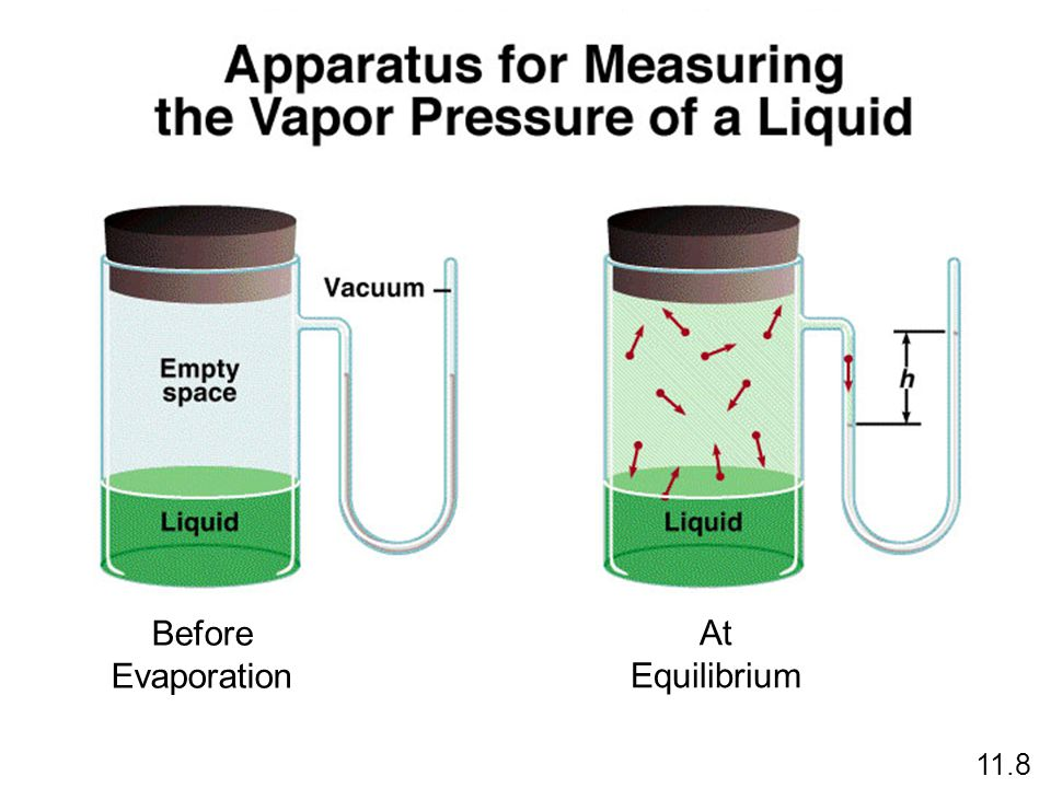 Before Evaporation At Equilibrium 11.8