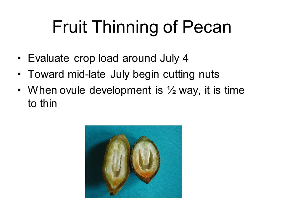 Fruit Thinning of Pecan