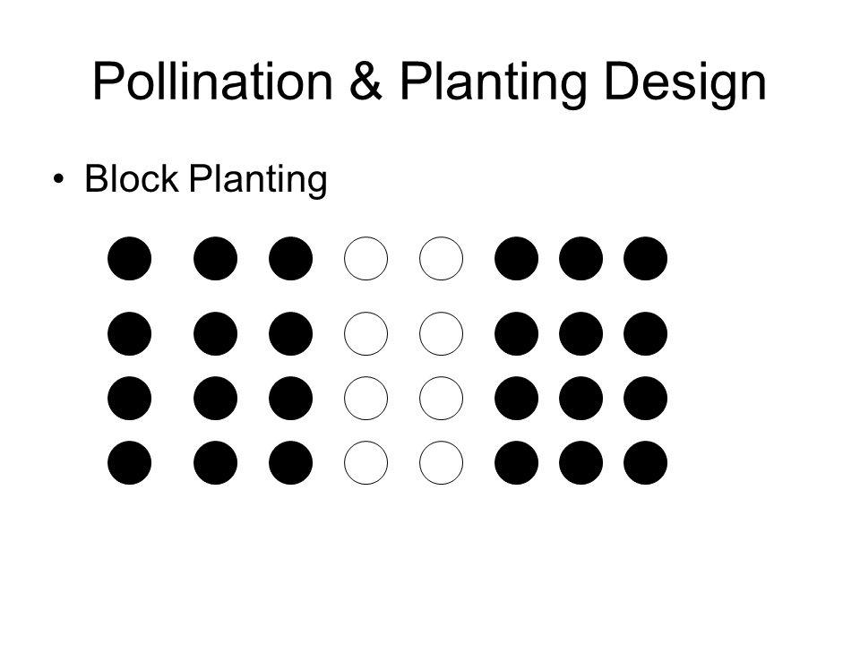 Pollination & Planting Design