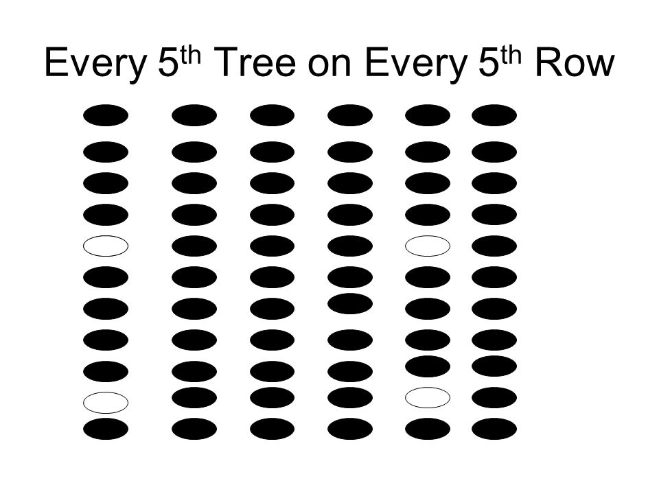 Every 5th Tree on Every 5th Row