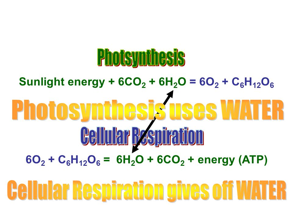 Photosynthesis uses WATER