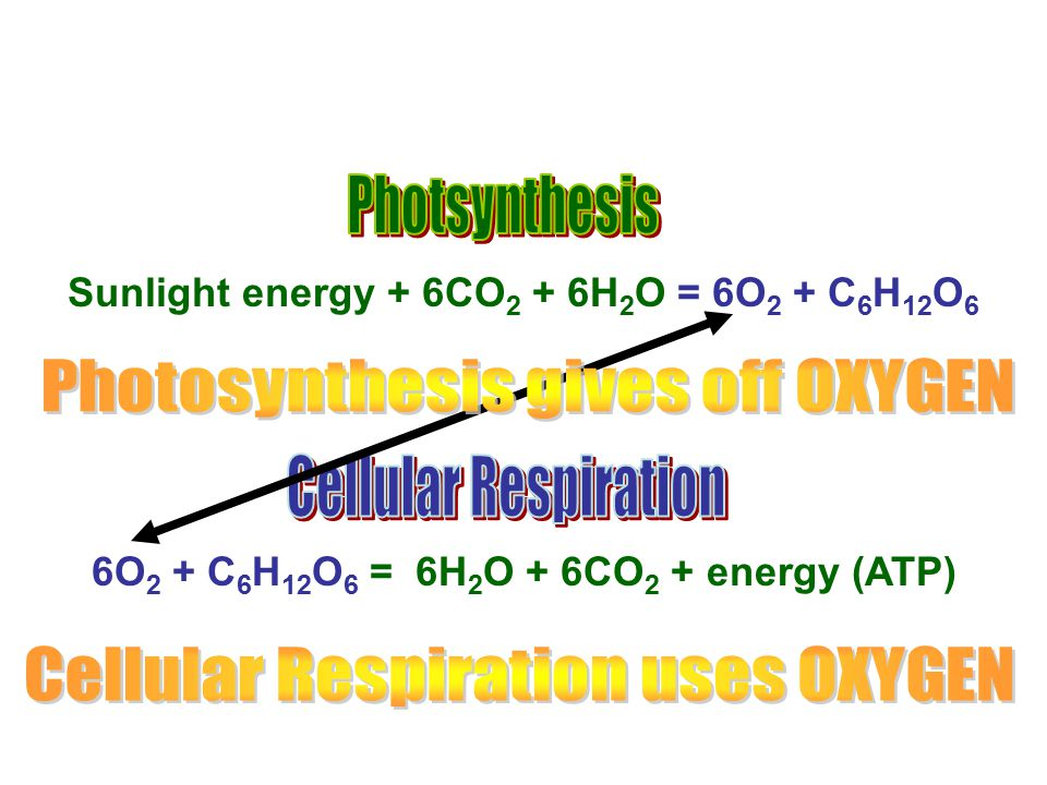 Photosynthesis gives off OXYGEN