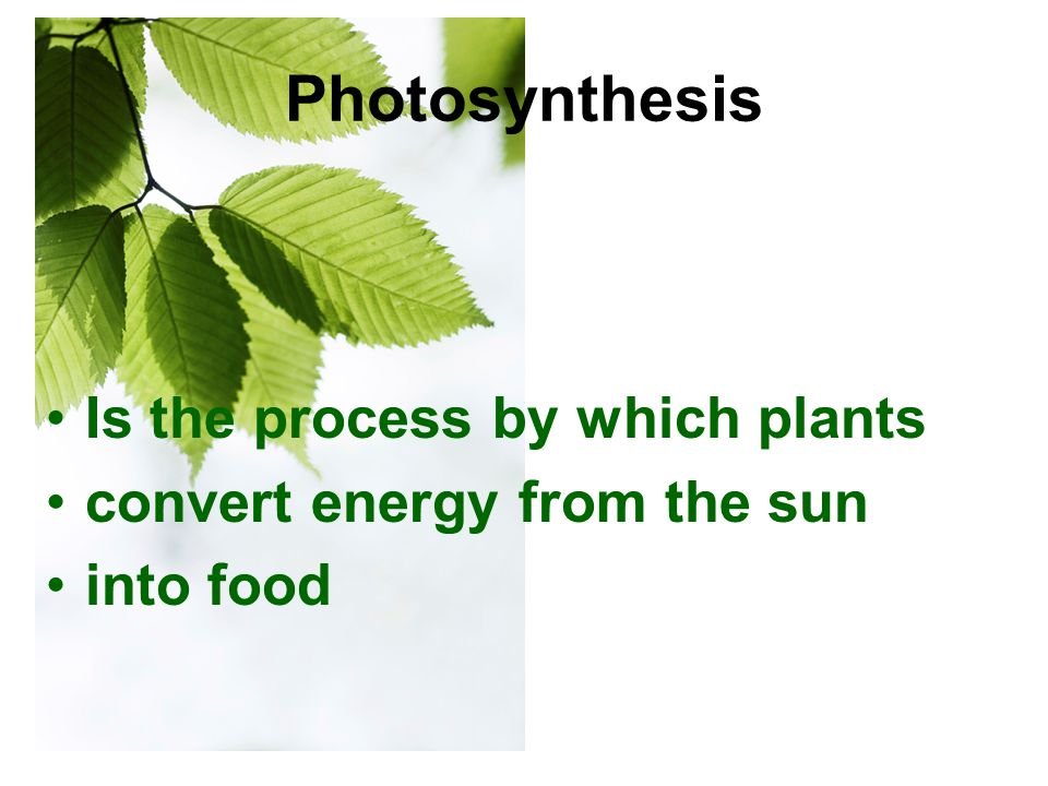 Photosynthesis Is the process by which plants