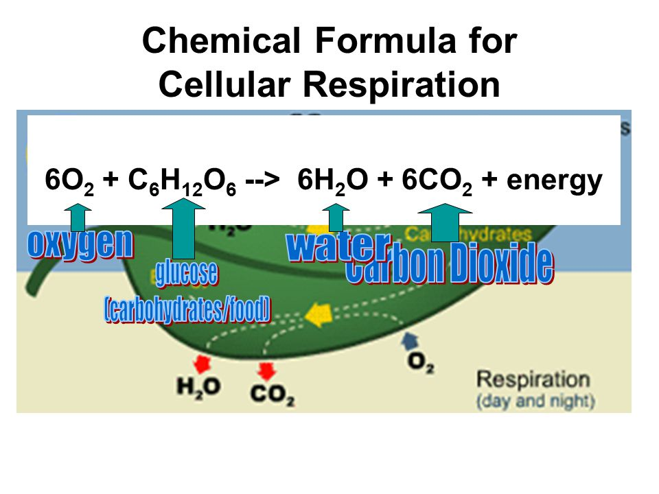 write the equation for cellular respiration Intro to redox in cellular respiration  what is the balanced equation for the combustion of butane  introduction to cellular respiration and redox.