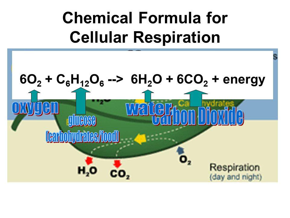 Chemical Formula for Cellular Respiration