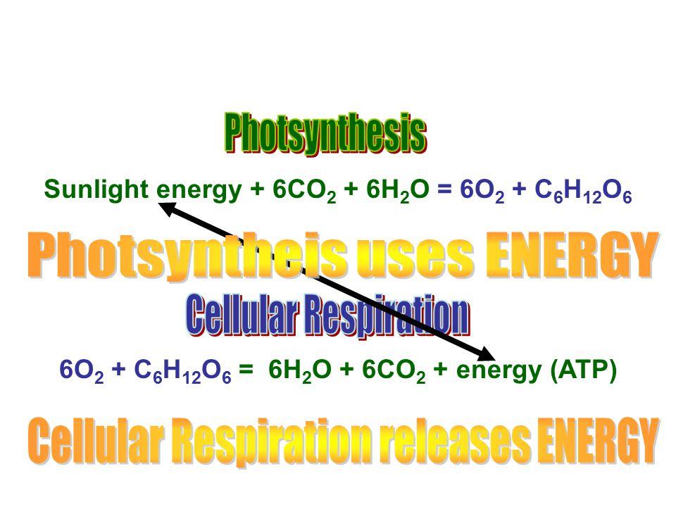 Photsyntheis uses ENERGY