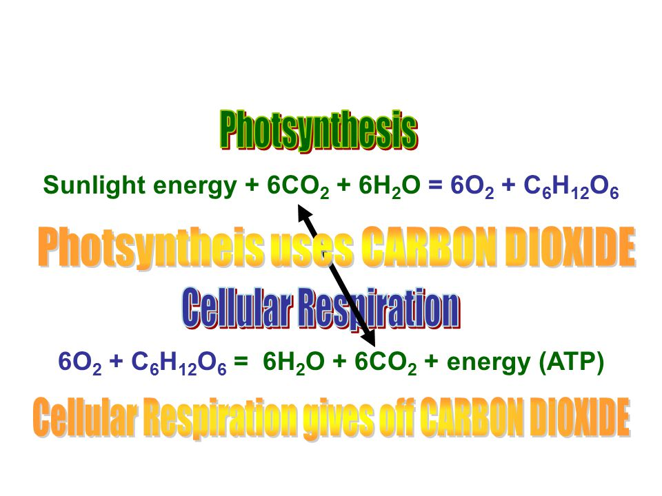 Photsyntheis uses CARBON DIOXIDE
