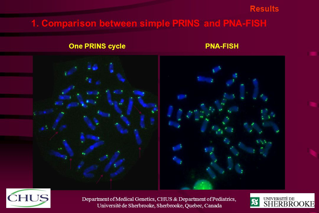 1. Comparison between simple PRINS and PNA-FISH
