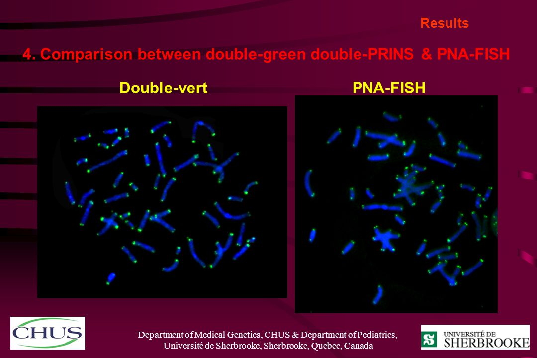 4. Comparison between double-green double-PRINS & PNA-FISH
