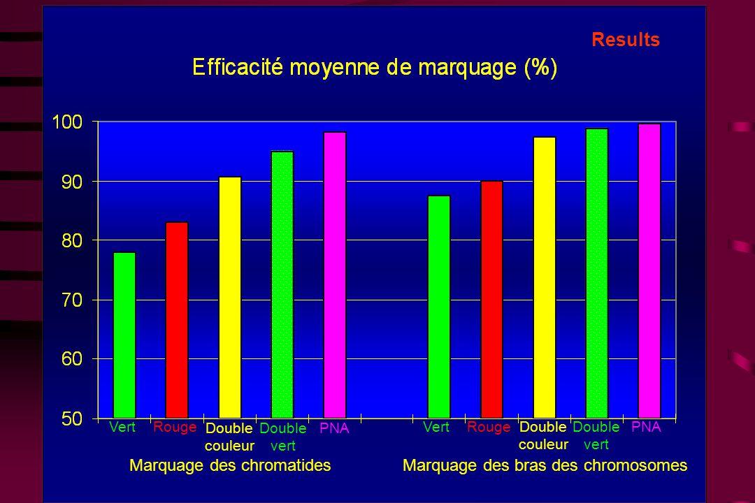 Results Marquage des chromatides Marquage des bras des chromosomes