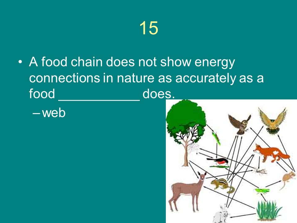 15 A food chain does not show energy connections in nature as accurately as a food ___________ does.