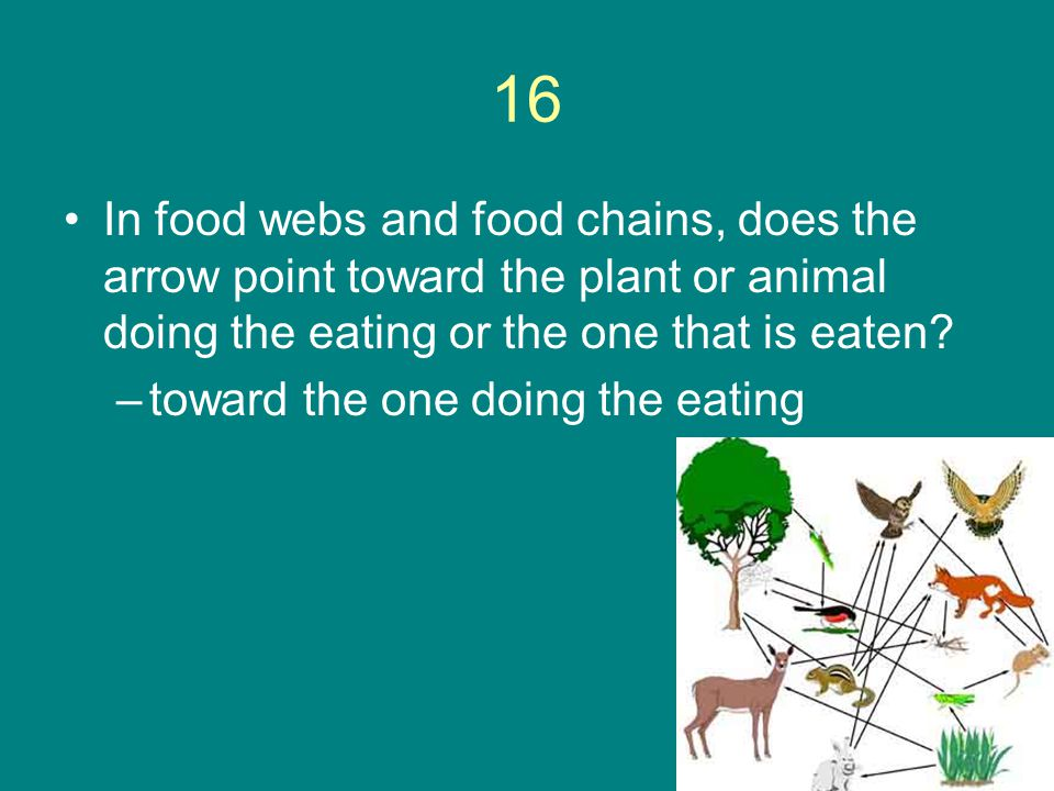 16 In food webs and food chains, does the arrow point toward the plant or animal doing the eating or the one that is eaten