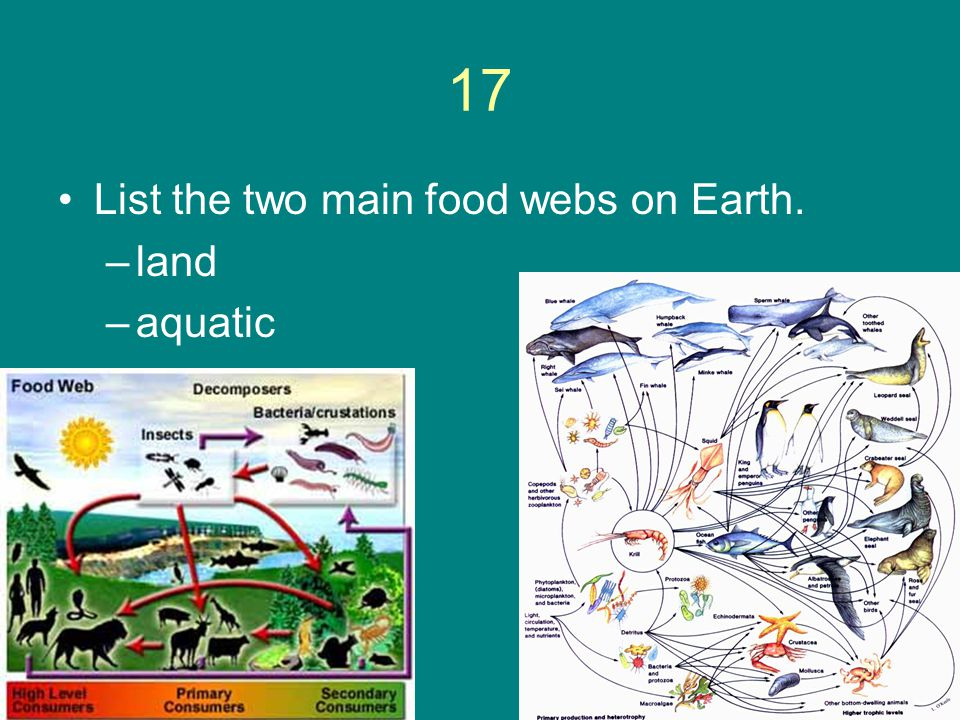 17 List the two main food webs on Earth. land aquatic