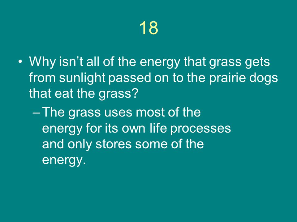 18 Why isn't all of the energy that grass gets from sunlight passed on to the prairie dogs that eat the grass