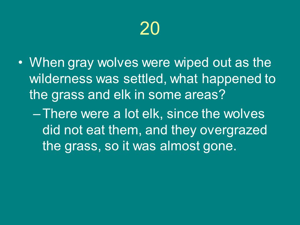 20 When gray wolves were wiped out as the wilderness was settled, what happened to the grass and elk in some areas