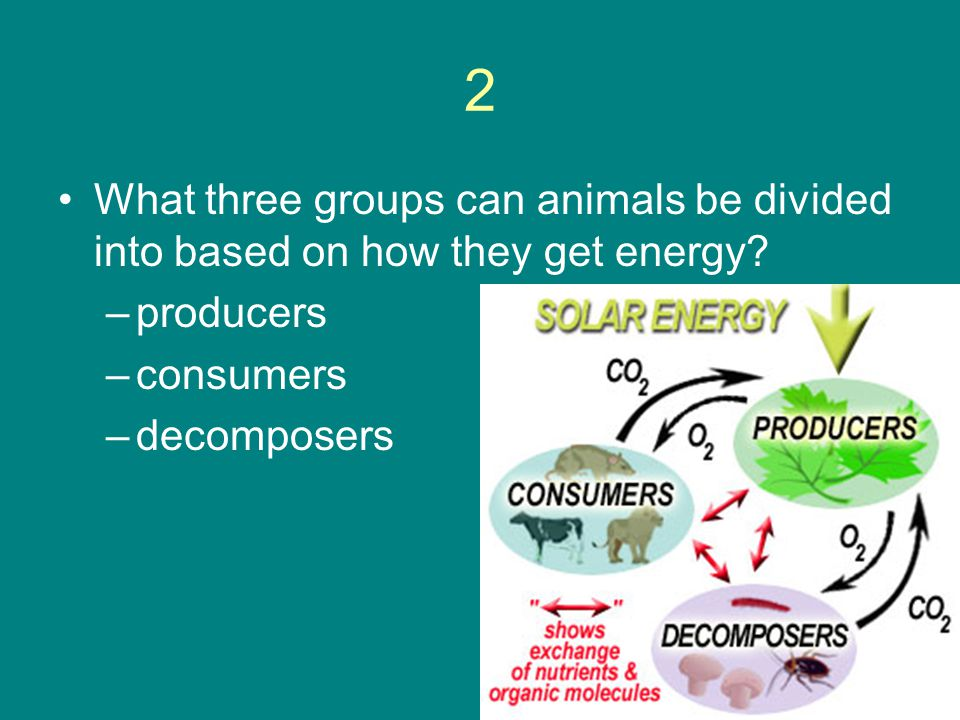 2 What three groups can animals be divided into based on how they get energy producers. consumers.