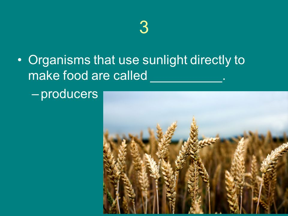 3 Organisms that use sunlight directly to make food are called __________. producers