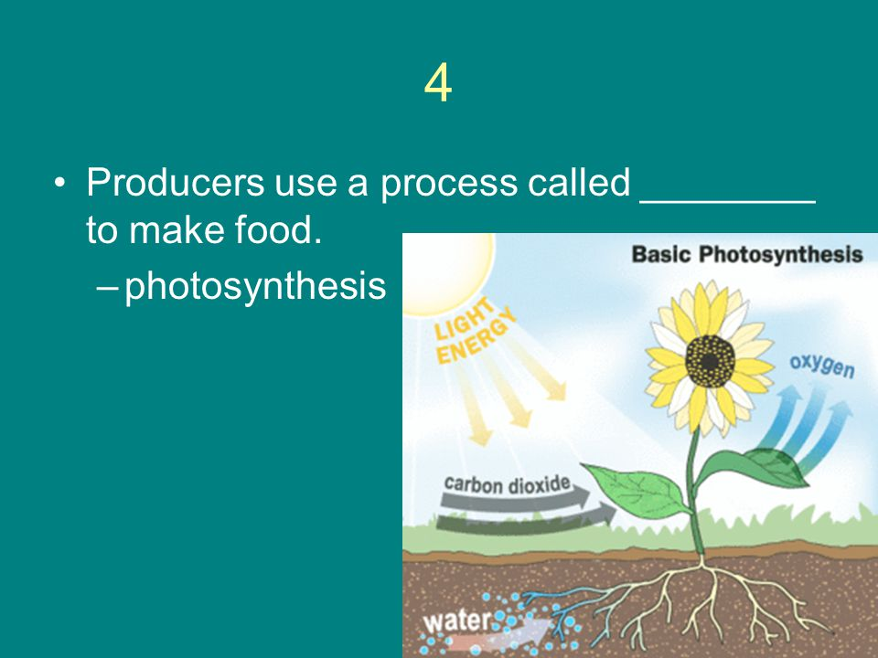 4 Producers use a process called ________ to make food. photosynthesis