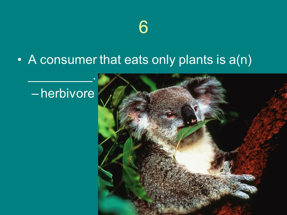 6 A consumer that eats only plants is a(n) _________. herbivore