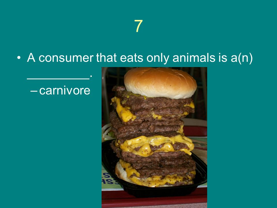 7 A consumer that eats only animals is a(n) _________. carnivore