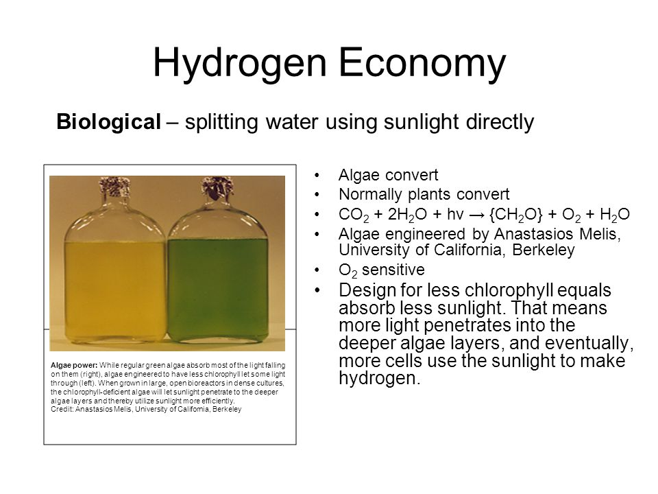 Hydrogen Economy Biological – splitting water using sunlight directly