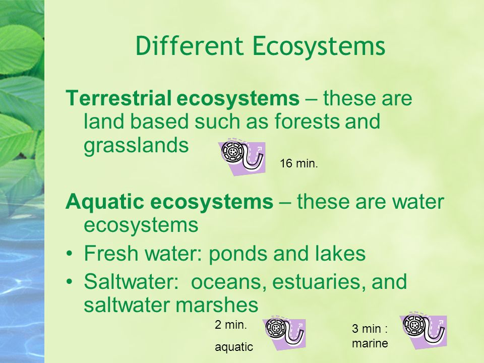 Different Ecosystems Terrestrial ecosystems – these are land based such as forests and grasslands. Aquatic ecosystems – these are water ecosystems.