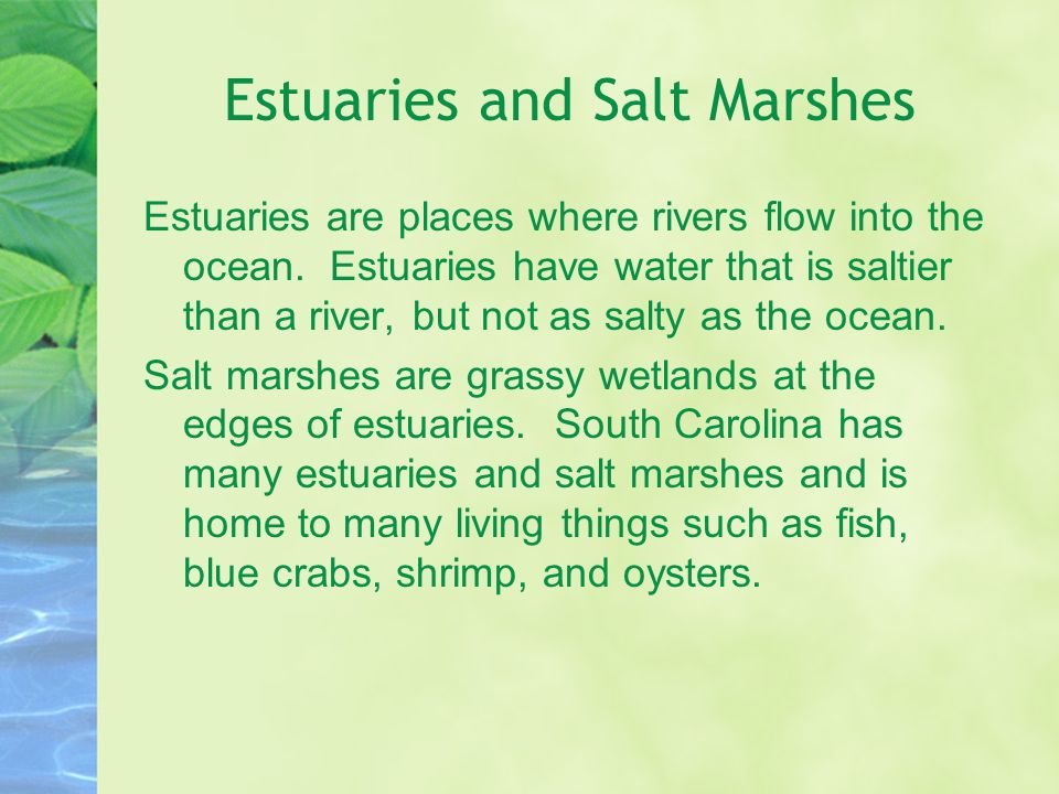 Estuaries and Salt Marshes