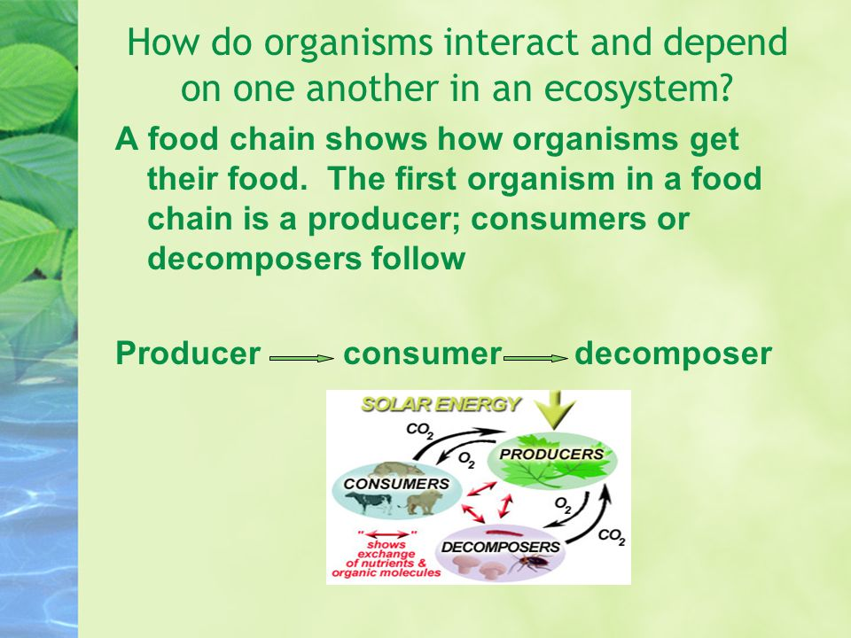 How do organisms interact and depend on one another in an ecosystem