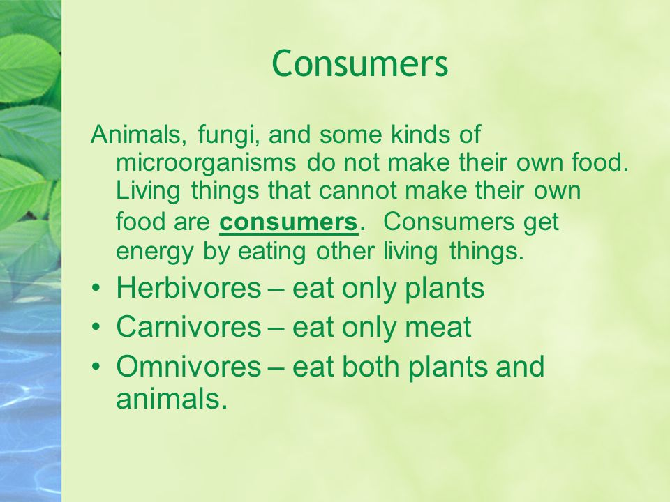 Consumers Herbivores – eat only plants Carnivores – eat only meat
