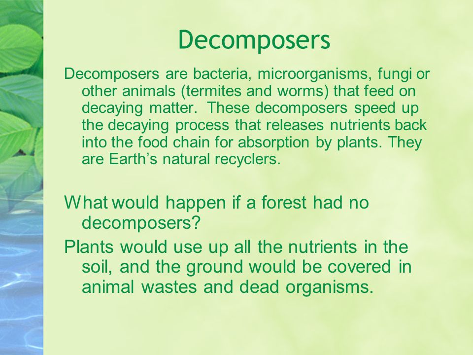 Decomposers What would happen if a forest had no decomposers