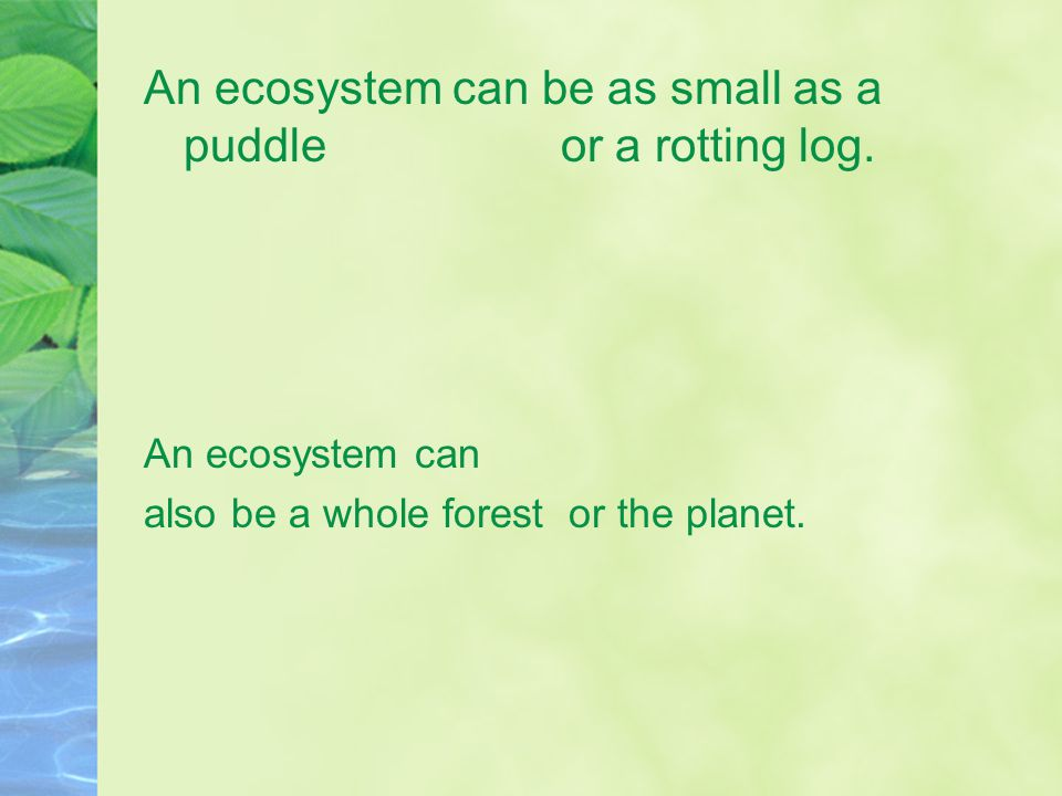 An ecosystem can be as small as a puddle or a rotting log.
