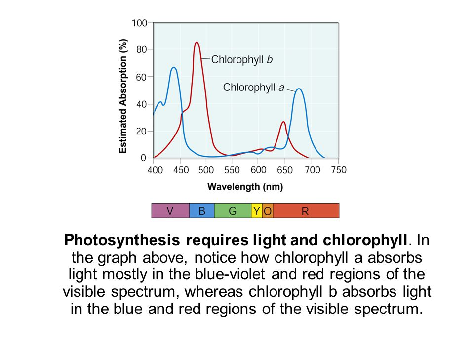 Photosynthesis requires light and chlorophyll