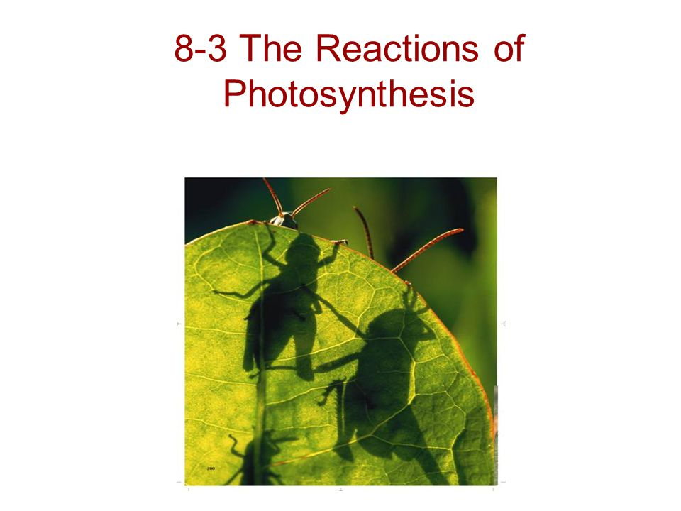 8-3 The Reactions of Photosynthesis