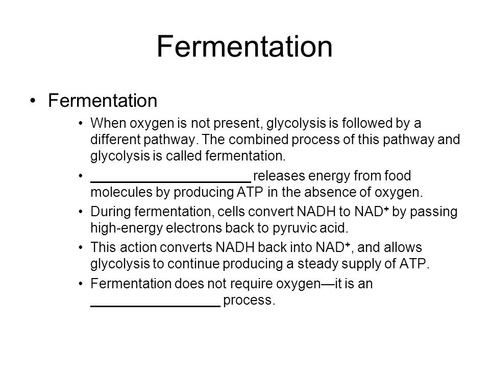 Fermentation Fermentation