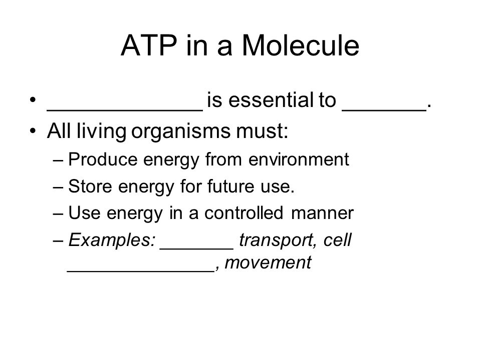 ATP in a Molecule _____________ is essential to _______.