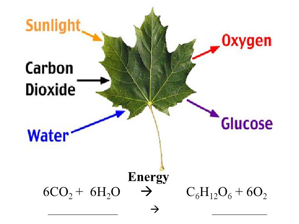 Energy 6CO2 + 6H2O  C6H12O6 + 6O2.