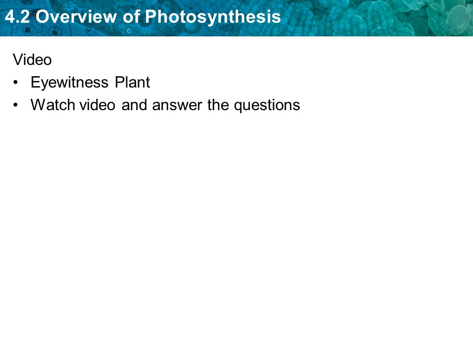 Video Eyewitness Plant Watch video and answer the questions