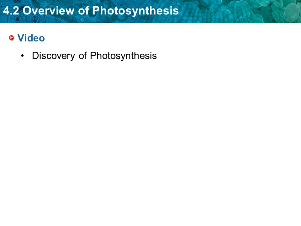 Video Discovery of Photosynthesis