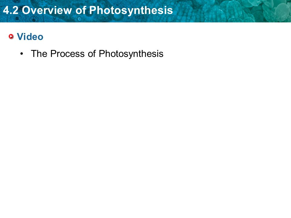 Video The Process of Photosynthesis