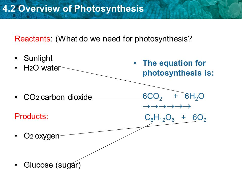 Reactants: (What do we need for photosynthesis