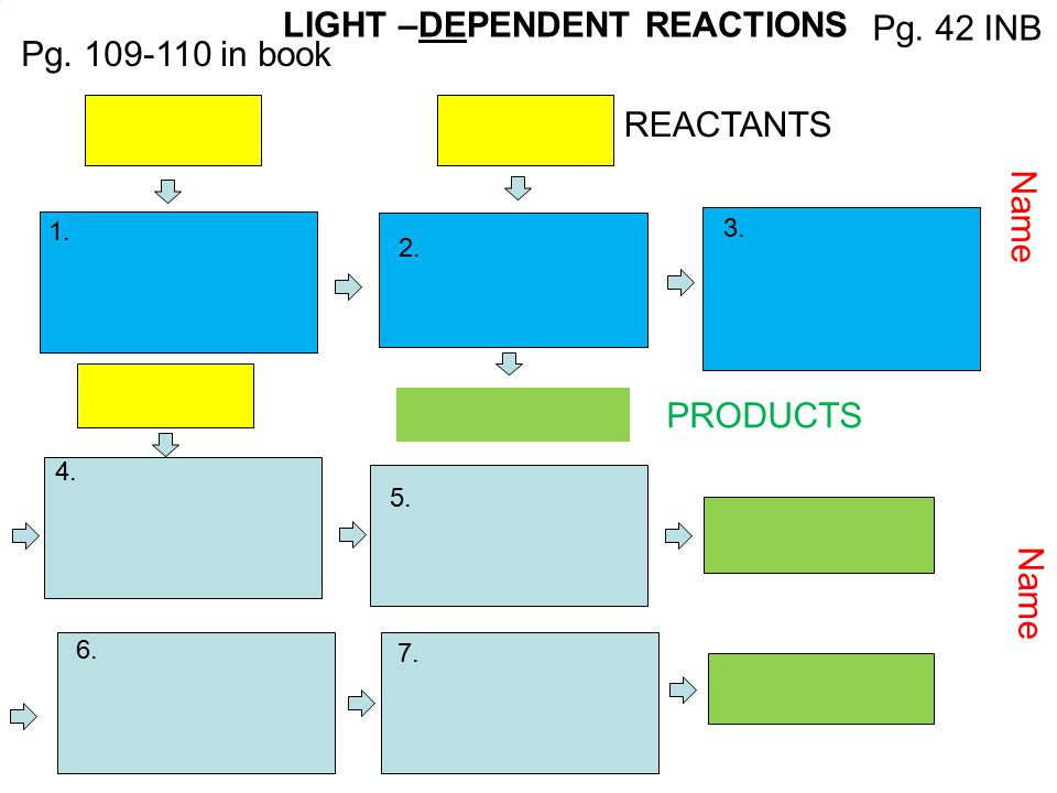 LIGHT –DEPENDENT REACTIONS Pg. 42 INB Pg. 109-110 in book