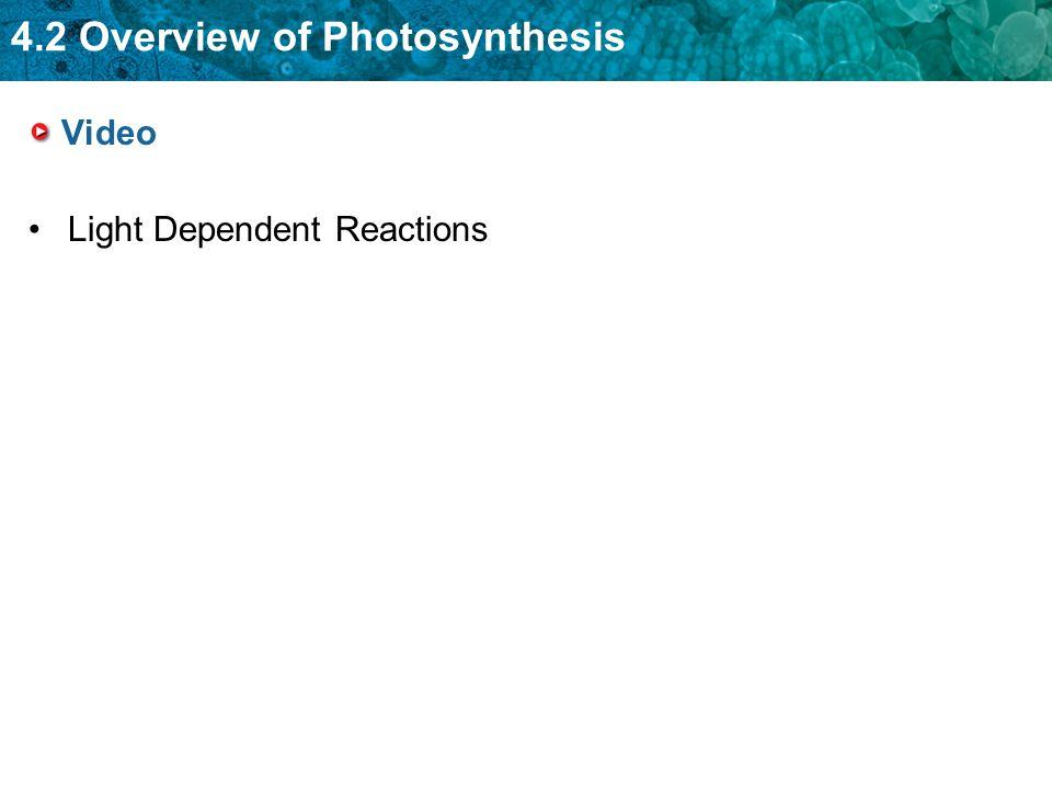 Video Light Dependent Reactions
