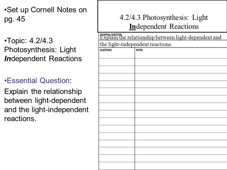 4.2/4.3 Photosynthesis: Light Independent Reactions